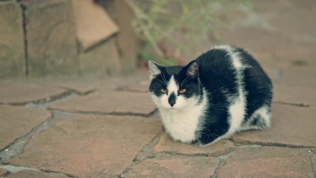 cat resting in the garden. sitting on a pavement - cat blinking stock videos & royalty-free footage