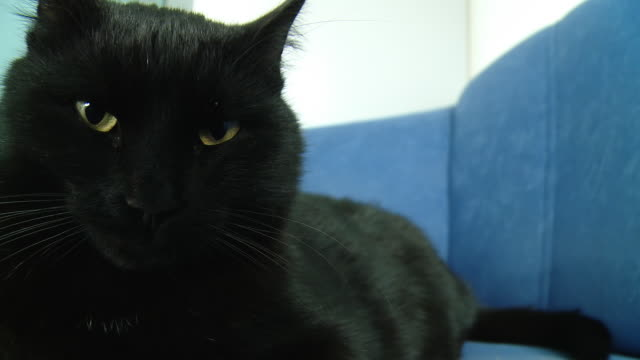 HD: Cat Resting On A Sofa