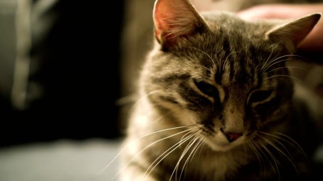 Katze auf einem sofa