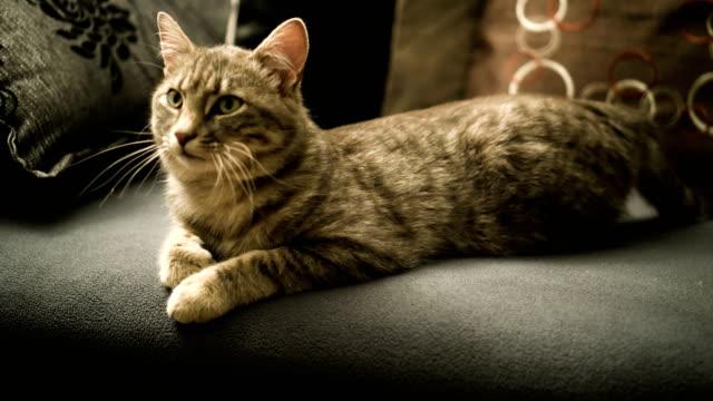 Cat resting on a sofa