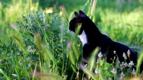 vidéos et rushes de chat se frottent de plante verte, sent et goûte il - sentir