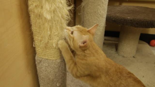 Cat scratching a scratch post