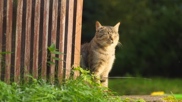猫が座るし、太陽の下でリラックス