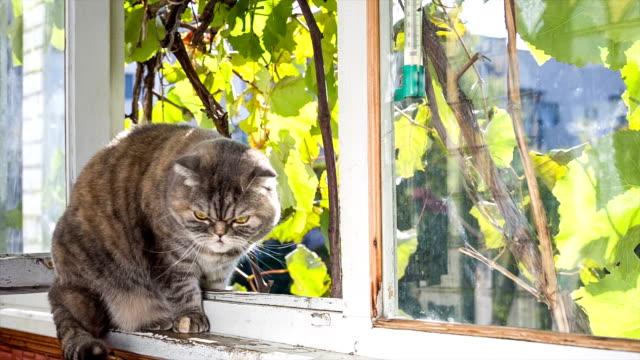 vídeos de stock, filmes e b-roll de gato situa-se na varanda e vista da rua. - peitoril de janela