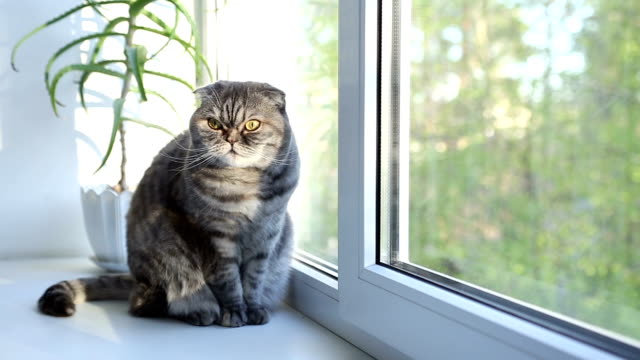 cat sits on the windowsill morning. - laziness stock videos and b-roll footage