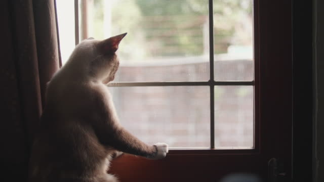 cat sits on windowsill and looks out window. - sitting video stock e b–roll