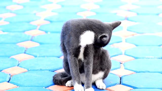 Katze sitzend und Reinigung selbst