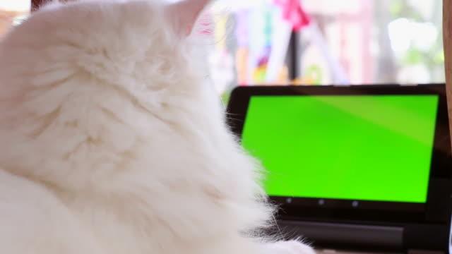 kat zit op computer