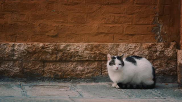 ms - cat sitting in front of an old brick wall - 壁点の映像素材/bロール