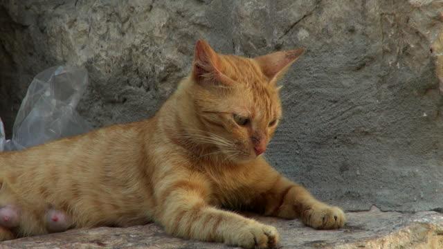 vídeos de stock, filmes e b-roll de cat sitting in the city - jerusalém