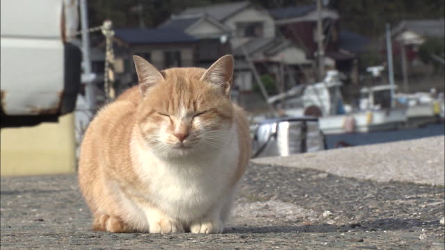 a cat sitting near the harbor, ainoshima, fukuoka, japan - 福岡県点の映像素材/bロール
