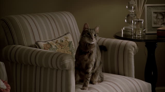 A cat sitting on a sofa in a living room.
