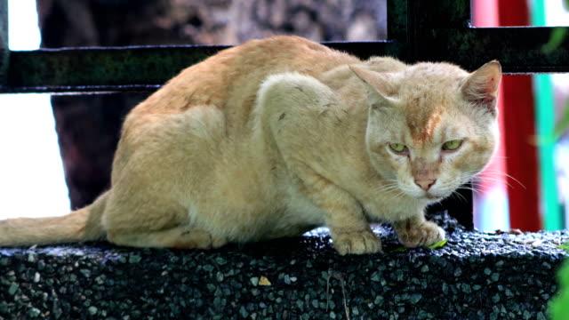 vídeos y material grabado en eventos de stock de gato sentado en la pared de hormigón al aire libre - pared de cemento