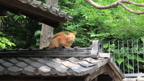 ms cat sitting on japanese traditional roof / shinjyuku-ku, waseda, tokyo, japan - rooftop stock videos & royalty-free footage