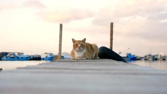 Cat sitting on scaffolding
