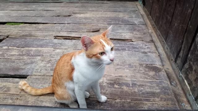 vídeos y material grabado en eventos de stock de gato sentado en tablón de madera - vibrisas
