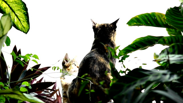 猫のラウンジ - 雑種のネコ点の映像素材/bロール