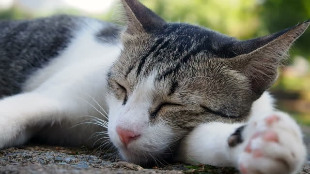 cat sleep - silver coloured stock videos & royalty-free footage