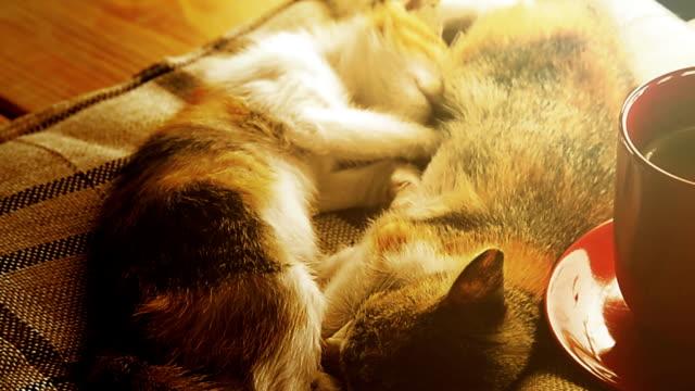 Katze schläft am Fenster mit heißem Kaffeetasse