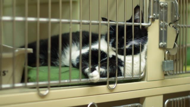 Cat sleeping in a cage, animal shelter