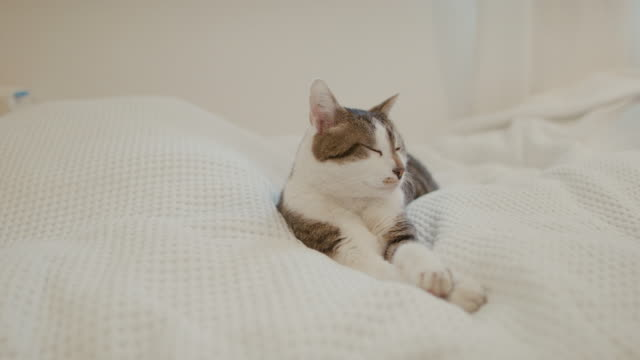 cat sleeping on bed - animal hair stock videos & royalty-free footage