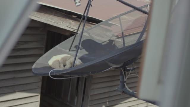 vídeos y material grabado en eventos de stock de gato durmiendo en antenas de plato parabólicas - antena parte del cuerpo animal