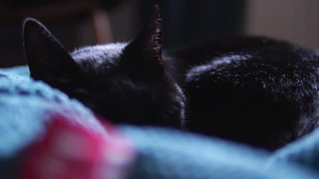 Cat sleeping.