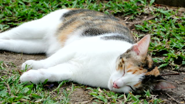 猫のベッド - 雑種のネコ点の映像素材/bロール