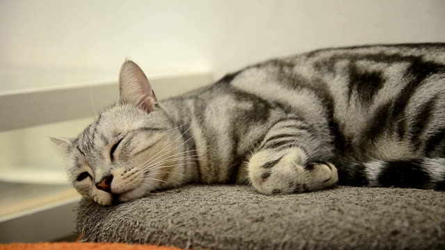 gatto dormire - pavimento video stock e b–roll