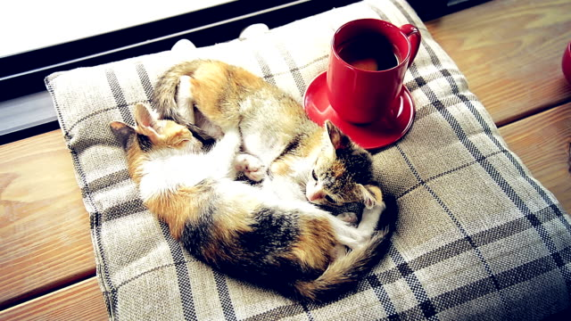 cat sleeping with hot coffee cup - stanco video stock e b–roll