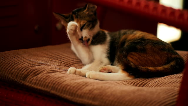 cat, slow motion - parte del corpo animale video stock e b–roll