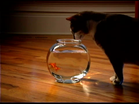 cat sniffing goldfish bowl - bowl stock videos & royalty-free footage