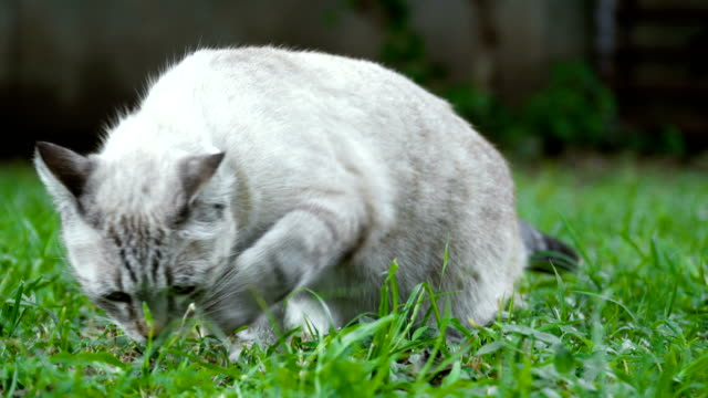 CU cat sniffing grass
