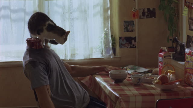 vidéos et rushes de a cat sniffs the neck of a decapitated body then jumps off the kitchen table near blood on the floor. - perception sensorielle