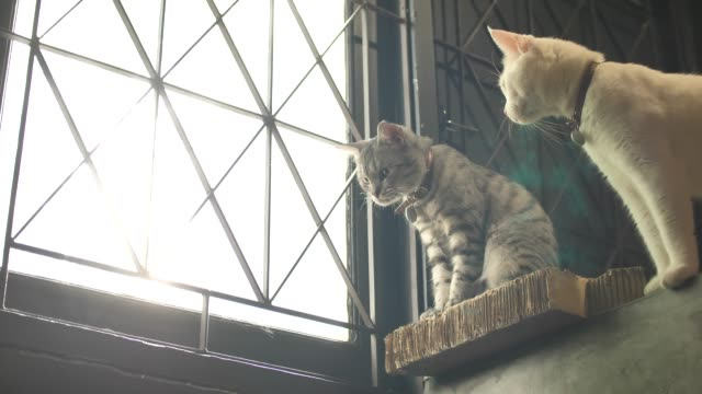 vídeos de stock, filmes e b-roll de gato em pé perto da janela e olhando do lado de fora - bigode de animal