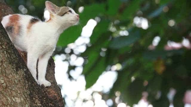 cat stuck in tree, pet rescue - trapped stock videos & royalty-free footage