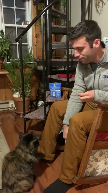 cat thinks he's a dog - vermont stock videos & royalty-free footage