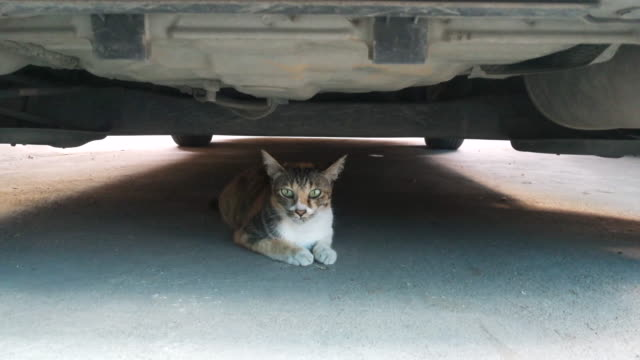 vídeos y material grabado en eventos de stock de gato bajo coche shot en el teléfono inteligente - debajo de