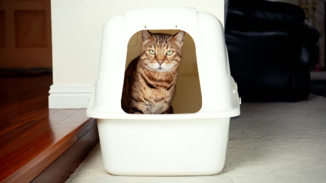 4k cat using litter box - unpleasant smell stock videos & royalty-free footage