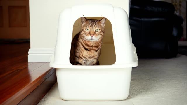 vídeos y material grabado en eventos de stock de 4k gato usando basura cuadro - malos olores