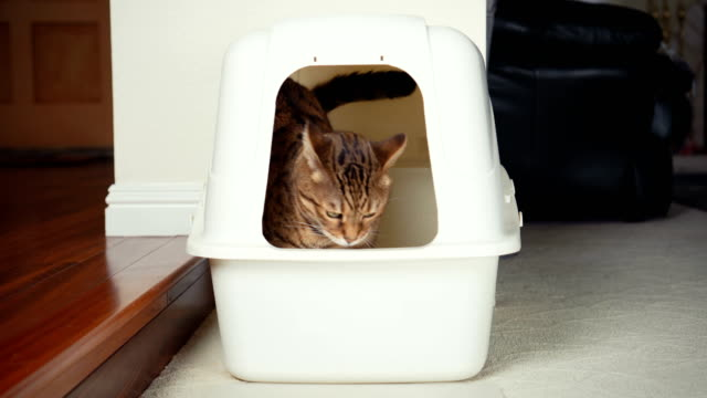 4K Cat using litter box