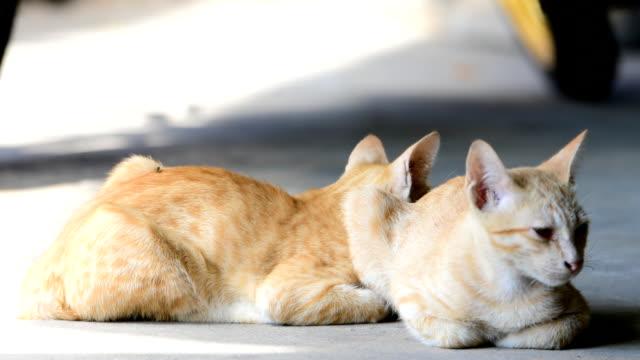 猫 - 雑種のネコ点の映像素材/bロール