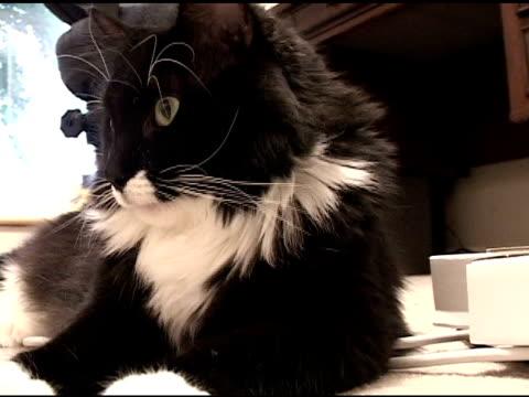 vídeos y material grabado en eventos de stock de cat - vibrisas