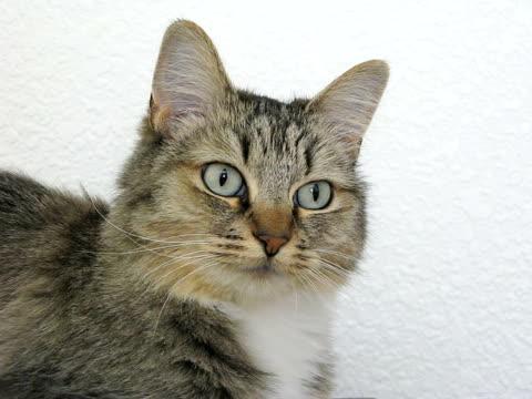 vidéos et rushes de cat (ntsc - caméra tremblante