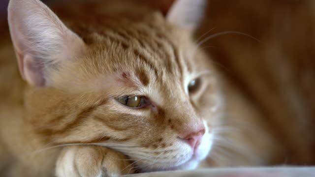 4k: cat - animal hair stock videos & royalty-free footage
