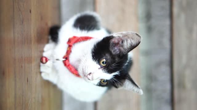vídeos de stock, filmes e b-roll de gato - bichos mimados