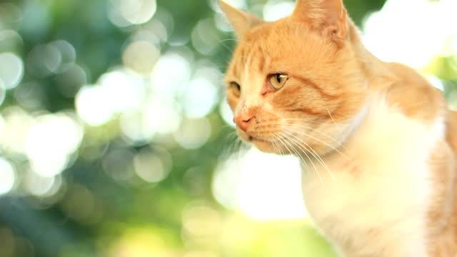 cat - morrhår bildbanksvideor och videomaterial från bakom kulisserna