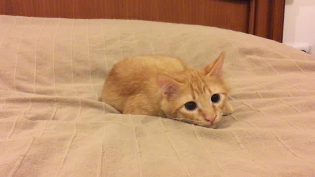 cat - auf den zehenspitzen stock-videos und b-roll-filmmaterial