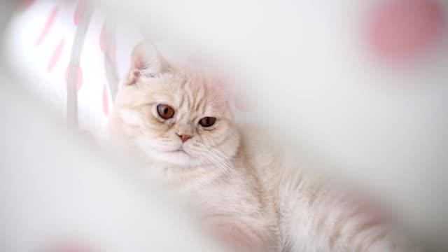 cat - 動物の頭点の映像素材/bロール