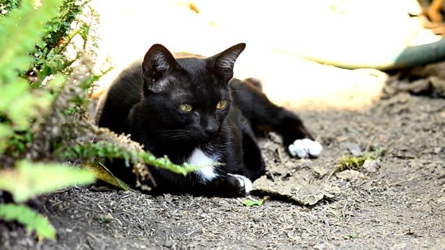 猫 - 黒猫点の映像素材/bロール